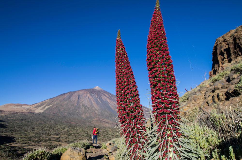 excursiones-tenerife-parque-nacional-el-teide-baobab-suites